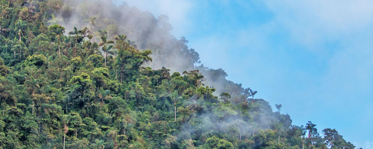 Manu Road Cloud Forest